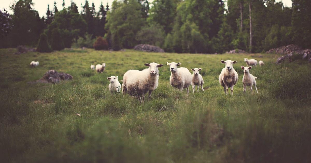 25 hustlertricks til din online markedsføring, der får dig til at ligne et brægende får i flokken